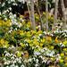 Spring Bonanza by Renata Lenartowicz