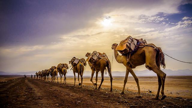 Caravanas de sal en Danakil, Dallol, Ethiopia