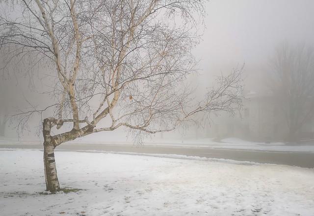 brouillard / Fog