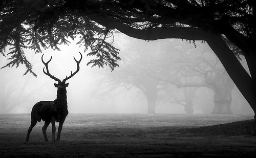 Antlers in the Mist