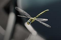 Libelle2 Kopie (2).jpg