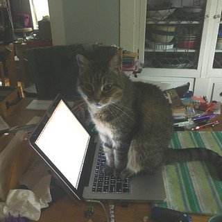 Mavis surfs the web, using my macbook as a surfboard | by Tysasi