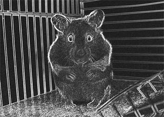 Sketchy Hamster
