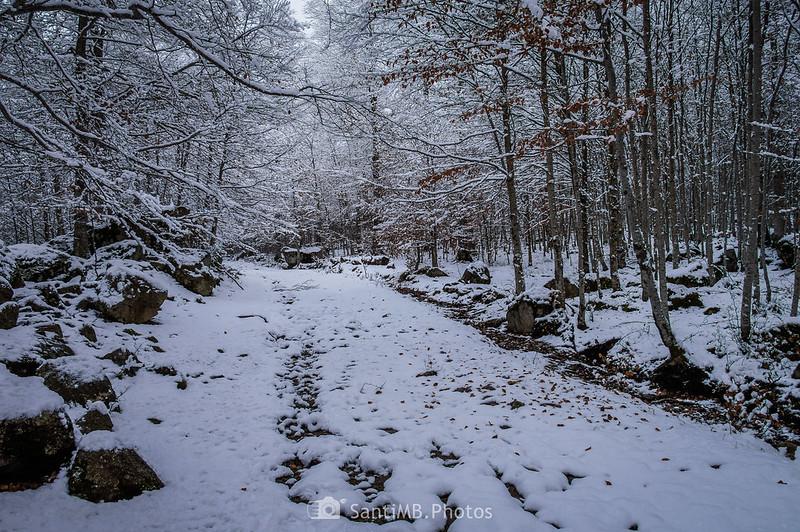Camino al Espitau de Vielha a través del Bòsc de Conangles