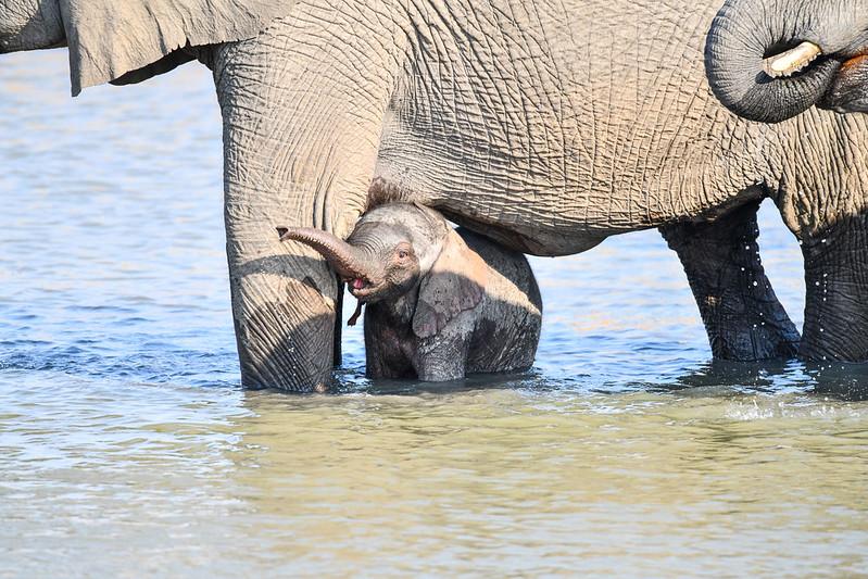 2297 Elephant