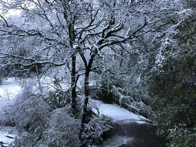 Snow on the ground, Auburn, Placer County, California