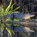 American Alligator - Photo (c) Dennis Church, some rights reserved (CC BY-NC-ND)