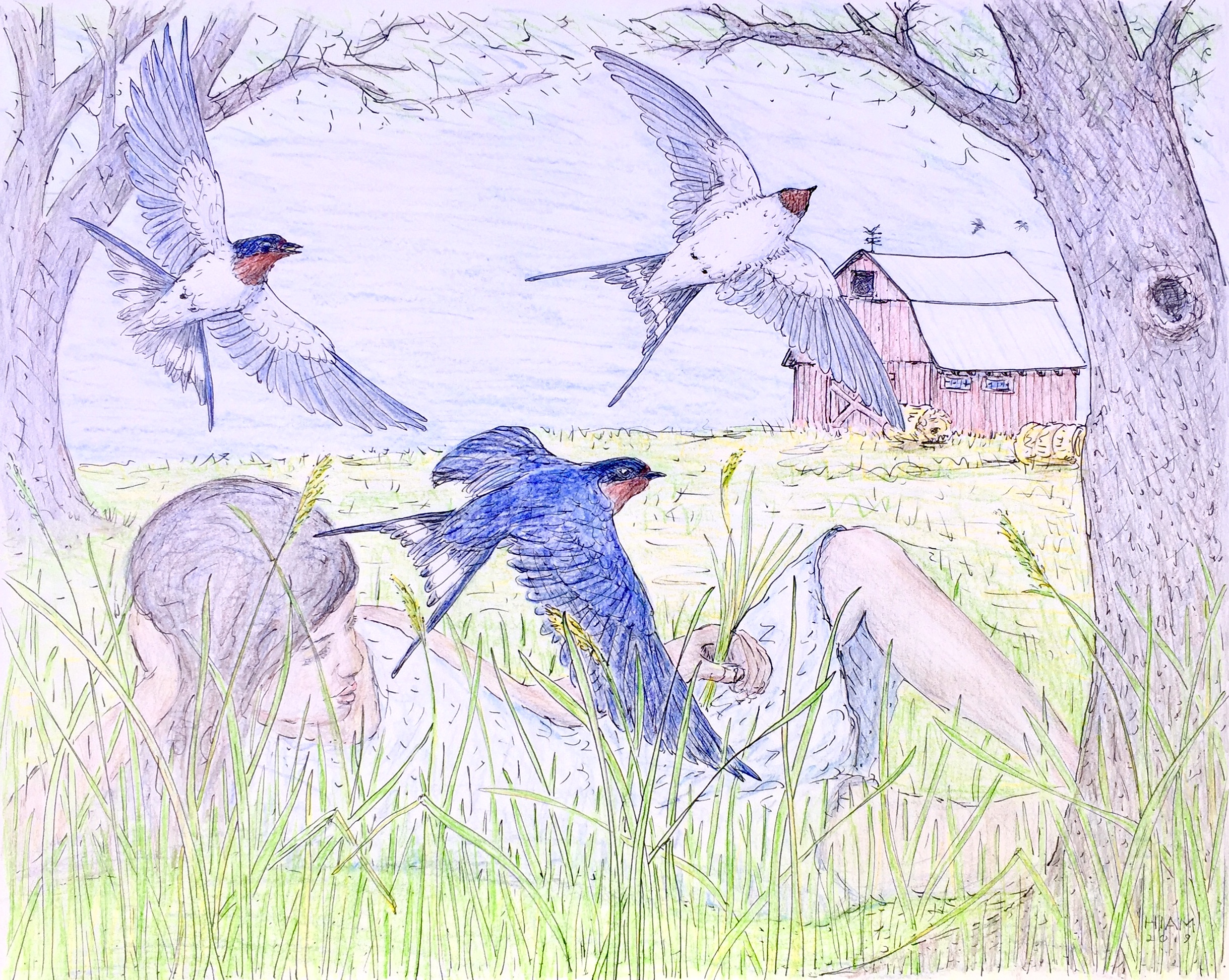 Barn-Swallows-Over-Meadow