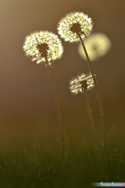 Glowing Diamonds *Nature's Inspiration*