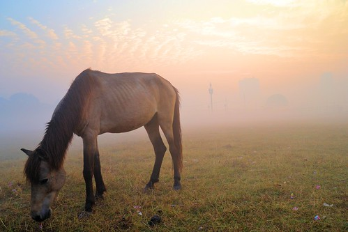 kolkata winter maidan mist misty morning sunrise city cityscape landscape artistic silhouette people horse riding equasy india romantic beautifulcity calcutta শীতেরসকাল