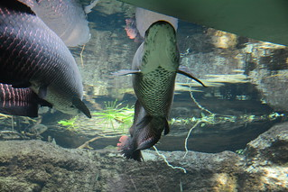 Den Bla Planet - Denmarks National Aquarium | by Jodimichelle