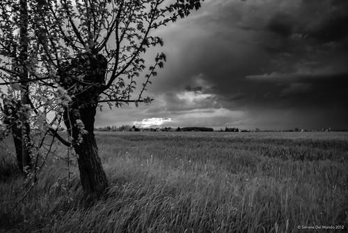 DSC_0101 | by SimoneDelMondoPhoto