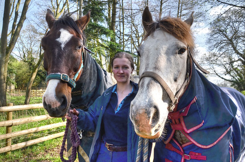 Horses & rider, Northamptonshire - Explored