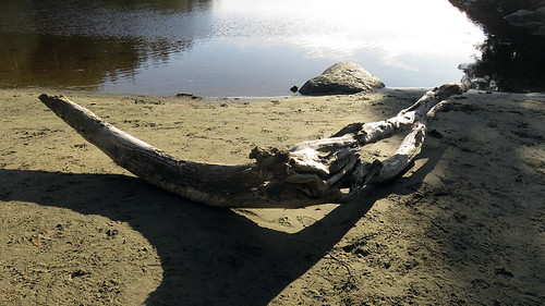 Beach with driftwood at the end of Tonquin Trail in Tofino on Vancouver Island