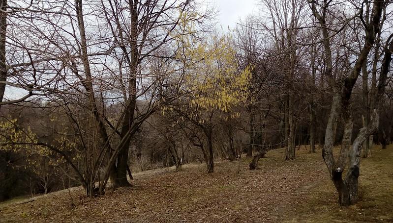 IMAG2841