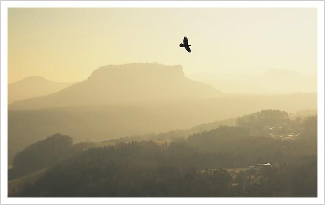 Ein Traum ist wie ein kleiner Vogel...
