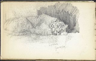 Tiger sleeping at London Zoo, England / Tigre endormi, zoo de Londres (Angleterre)
