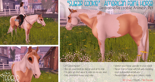 Teeglepet Ad: Sugar Cookie the American Paint Horse