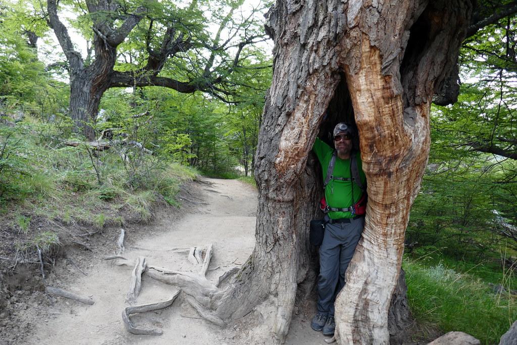 Steve in a Tree