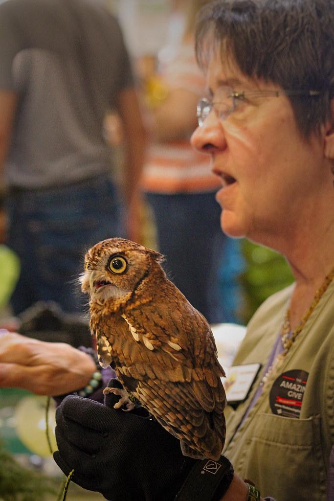 2019.03.09 Sunrise Wildlife at WBU Eastern Screech Owl Ruby 5