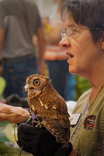 2019.03.09 Sunrise Wildlife at WBU Eastern Screech Owl Ruby 5 | by Admiral Elk