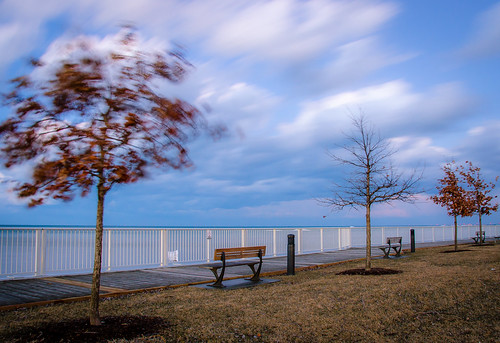 2019 canada lakestclair lakewoodpark march ontario tecumseh clouds winter trees leaves oaktree wind sky evening