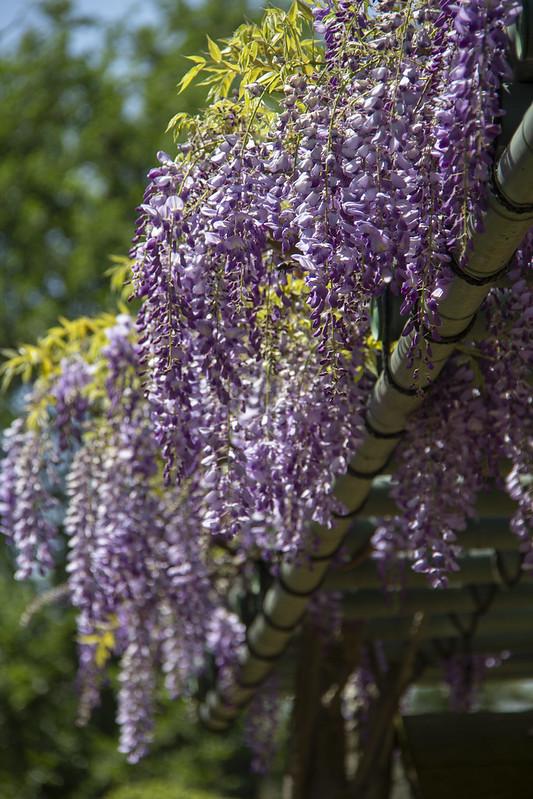 Hermann Park Blooms_21