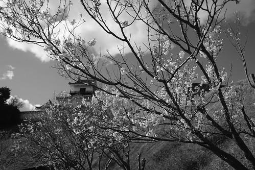 31-03-2019 Kakegawa, Shizuoka pref (5)