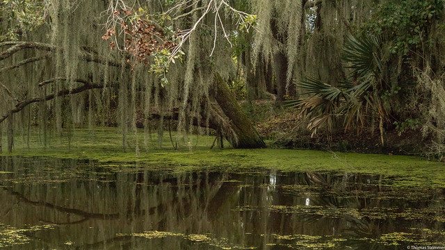 Jean Lafitte National Park, Louisiana