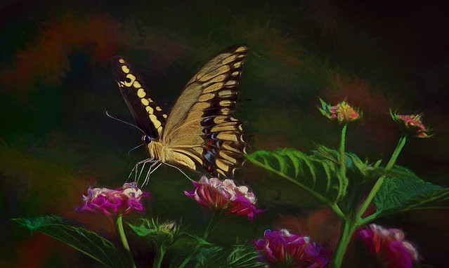 The Elusive Butterfly of Love