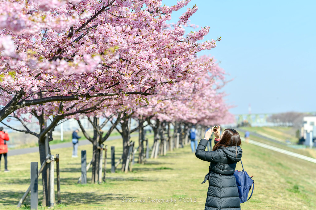 Kawazu Sakura / Edogawa Kawazu cherry tree