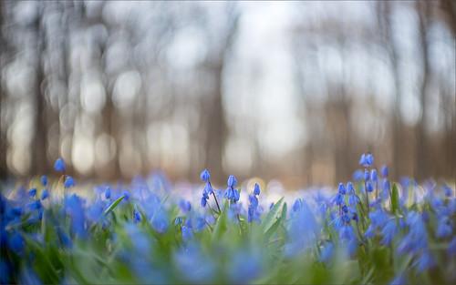Helios for spring | by Uldis Plinte