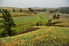 Rolling Hills with Morning Overcast Skies (Wind Cave National Park)