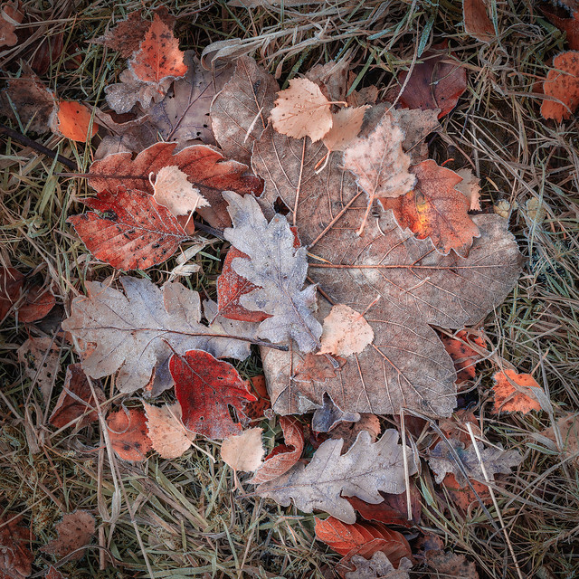 fallen leaves | Hermitage Woodland | Dunkeld | Perthshire