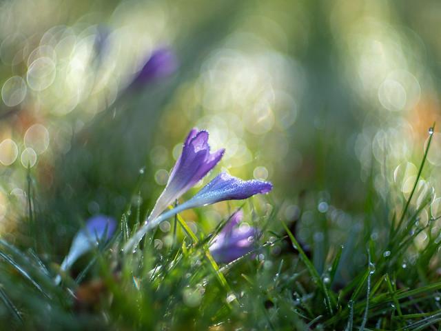 Lichtend pad naar de lente 2