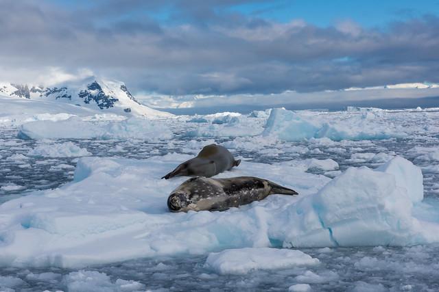 Cold Seals