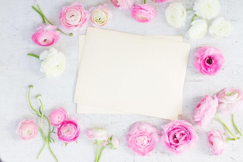 Обои white, pink, розовые цветы, flowers, beautiful, лютики, ranunculus картинки на рабочий стол, раздел цветы - скачать