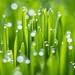 Digby Grass-1.jpg