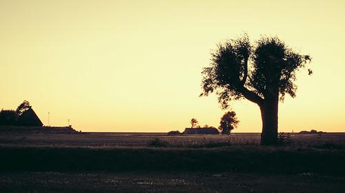 dämmerung farbe himmel landscape landschaft pflanze silhouette sonnenuntergang menschenleer simonsberg schleswigholstein deutschland