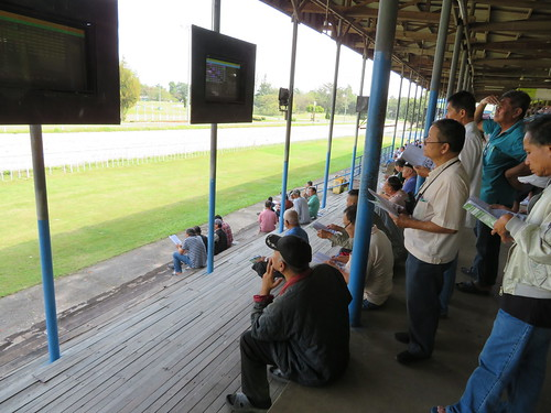 チェンマイ競馬場のスタンドで予想をする人々