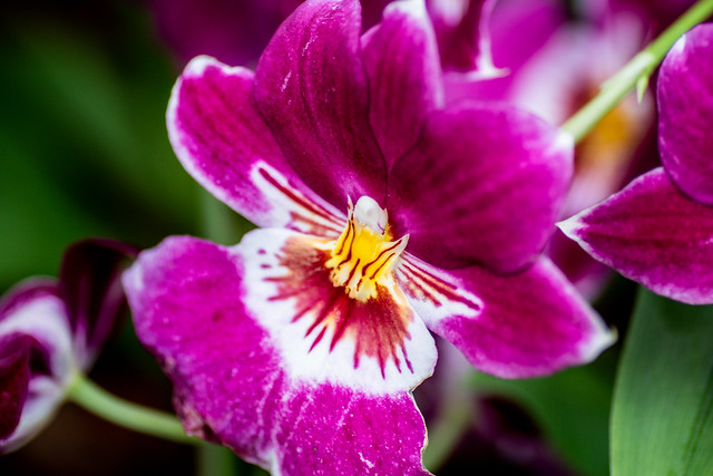 Kew Gardens Orchids-37
