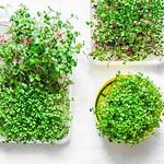 micro greens....