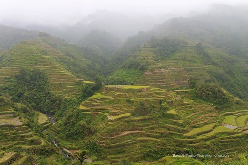 NFA - Aguian Viewpoint of the Banaue Rice Terraces   by Traveling Morion