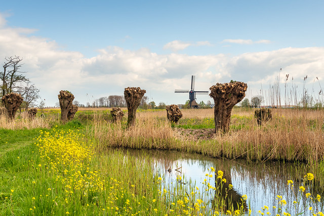 Another typical Dutch landscape in springtime