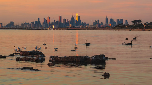 summer beach sunset swan water birds city seagulls bay melbourne brighton sea