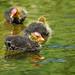 Ugly Ducklings by Renata Lenartowicz