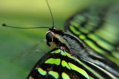 Papillons en Liberté 2019 - Photo 21