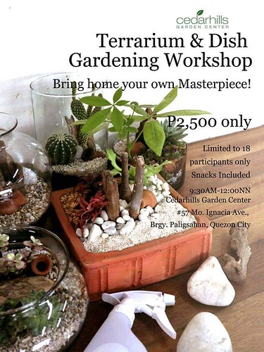 terrarium and dish garden workshop