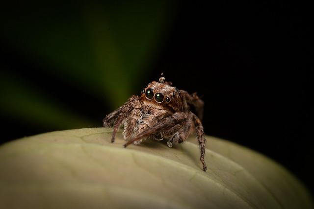 Spider E
