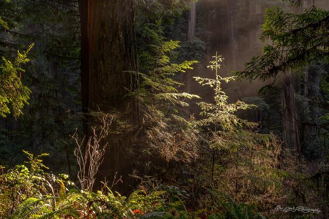 Enchanted Daybreak